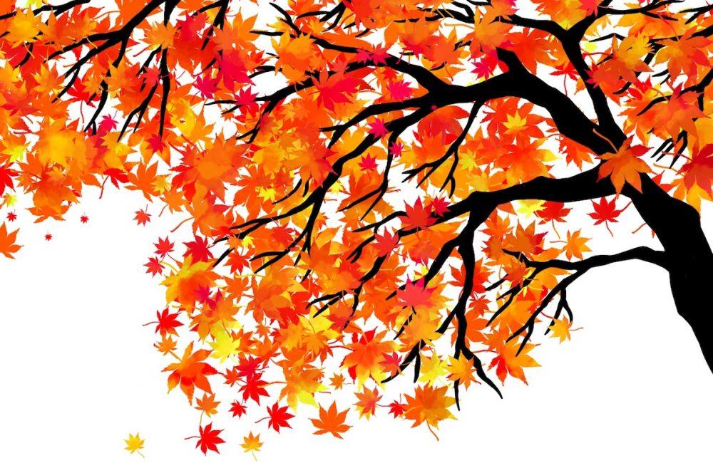 大阪城公園の紅葉シーズンはいつ?おすすめエリアやライトアップ時間も!