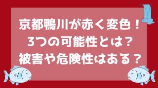 鴨川が赤いのはなぜ?3つの理由と被害や危険性を調査!【画像と動画】