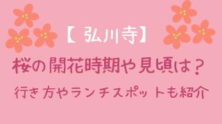 【弘川寺】桜の開花時期や見頃情報!拝観料や周辺ランチスポットまとめ
